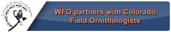 CFO Partnership
