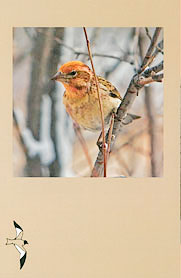 Western Birds 41(3) Back cover