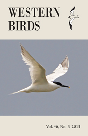 Western Birds Current Issue